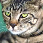 きりっとした顔からゆるふわな顔まで、猫の顔を撮る