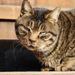 ソニーの高画質ミラーレス一眼「α7RIII」で寺猫を撮る