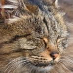 ソニーの高級望遠デジカメ「RX10M4」で路地の街の猫を撮る