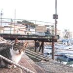 ソニーの万能望遠コンデジ「RX10M4」で漁港の猫を撮る