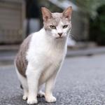 路地での写真がいい感じ 古い住宅街で猫に会う