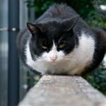 塀の上の猫は撮るアングルが悩ましい