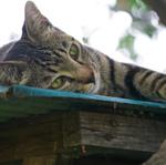 冬の日差しを浴びながら屋根の上でくつろぐ猫