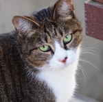 猫撮影も上から目線と下から目線では雰囲気が変わる