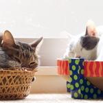 寒くなったら布団の中や車の中の猫に注意!