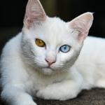 ニコンのフラッグシップ一眼「D850」で撮る猫は一味違う