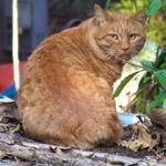 チャトラ柄の猫は明るくてフォトジェニック!