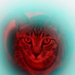 ソニーのフラッグシップミラーレス「α9」でキジトラを撮る!