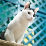 残念ながら移転するので……下高井戸にある地下空間の保護猫喫茶を再訪問!