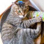 猫夢中の新おもちゃ「にゃんけり棒」で遊ぶ我が家の猫たち