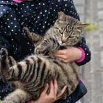 AFがすばらしい! パナソニックのミラーレス一眼「GH5」で撮る猫