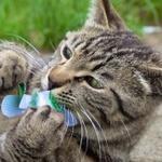 パナソニックのミラーレス「GH5」の「6Kフォト」でわんぱくなキジトラ猫に挑戦!