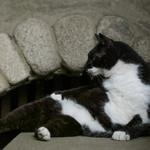 世田谷のお寺猫をシグマのミラーレス一眼「sd Quattro」で撮る!