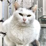 iPhoneだからこそ撮れる猫写真もある! インスタ投稿用写真は加工も大事