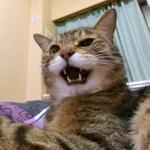 カシオの19mm超広角コンデジ「EX-ZR4000」で撮る広角猫