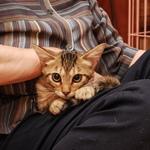 我が家の猫「かふか」、9年間の写真を振り返る