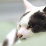 メカ/電子シャッターを使い分け! 暗いところで猫を撮る方法