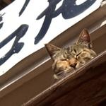 テレビクルーを引き連れて、冬の熱海猫を再訪問!