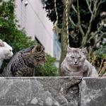 富士フイルムのミラーレス一眼「X-T2」で撮る、路地の猫たち