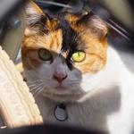 最新ミラーレスのマニュアルフォーカスは便利! 隠れている猫を撮る