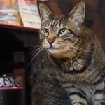 猫のいるカフェの畳の上でフリーアングルに猫撮る