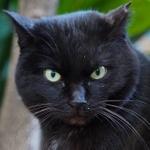 日没寸前の黒猫もバッチリ撮影! オリンパス「OM-D E-M1 Mark II」で撮った猫写真