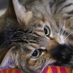 手ブレ補正とAF性能がすごい! オリンパス「OM-D E-M1 Mark II」で猫撮影