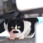 富士フイルムのフラッグシップミラーレス「X-T2」で猫撮影!