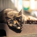 2016年の1~12月までを12匹の猫写真で振り返る