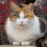 """知られざる""""猫がいっぱいいる街""""をそっと散策してみる"""