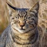 望遠レンズを持って河原の猫たちを撮ってみた