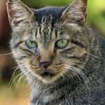 2016年に登場したさまざまなデジカメで撮った猫