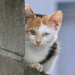 オッドアイの子猫に出会う! 親猫を探しながら猫撮影