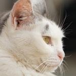 いろんな望遠コンデジで猫の顔をアップで撮る!