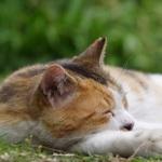 秋の日差しの中で気持ちよさそうに寝ている猫たち