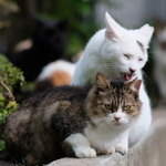 富士フイルム「X-T2」の縦位置チルトは猫撮りにたまらない魅力!