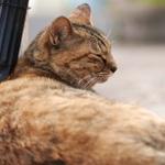 古い街並みの中、シグマ「sd Quattro」で猫撮り散歩!