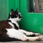 iPhone 7 Plusのデュアルカメラで撮る猫たち