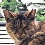 買ったばかりのiPhone 7 Plusで猫を撮る!