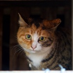 都会の中で猫のオアシス!? 神社仏閣でくつろぐ猫たち