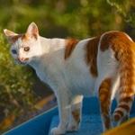 シグマ「sd Quattro」で撮る、晴れた日の河原でくつろぐ猫たち