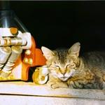 シグマのミラーレス一眼「sd Quattro」で猫を撮る!