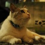 難易度は高いけどいい写真が撮れる! 夜の猫の撮影の仕方