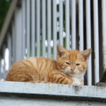 夏なので怪談猫……じゃなくて階段猫を撮る!