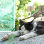 夏の風物詩!? 暑さでへちゃーっとつぶれている猫たち