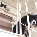 猫宅訪問! ハチワレ猫とハチワレ犬の共同生活