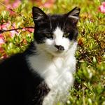 超高速AFは猫撮りに最適! ソニー「α6300」で夏の街猫を撮る!
