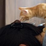 お昼寝したら元気に遊びまくる! 2匹のチャトラ子猫をミラーレス一眼で狙う