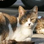 人にも猫にも寄っていく……漁港で出会ったかわいい白猫