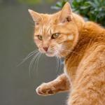高級ズーム機「LUMIX DMC-TX1」の望遠を使って猫を撮る!